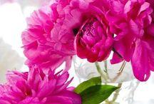 Flores: Diversas