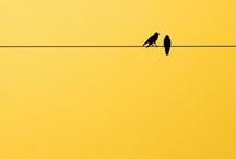 COLORS: Yellows & Earth shades