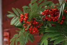 Red and Green / Complimentary colors and the traditional colors of Christmas :)