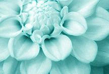 Flower Power / Flores que me echo