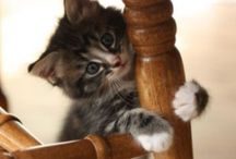 I'm A Cat, I'm A Kitty Cat