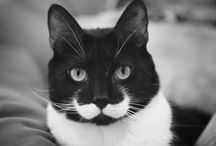"""Mustache / """"bow ties of the face"""" / by Shirizzle"""