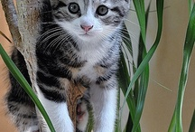 Cute Animals / Cute #animals pics! #cats, #dogs, #horses, #dolphins / by Cheryl Cope