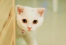 Cats / by atasinti