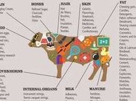 Reference pins and infographics / Informative pins which I refer back to when I need them. These mostly fit into categories like equestrian, SEO, blogging, social media and photography
