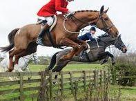 Horse photo tips