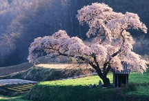 Japan - I want to travel there!