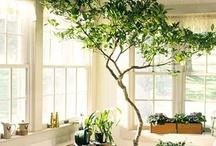 | Home sweet home | / favorite indoor living green rooms plants organize shelf sleeping colors lovely human plants ideas dream / by Vilde Vegem