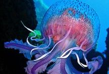 Aquarium / by Kamrie Bunce