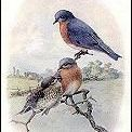 FBL Y2Q1: Birds