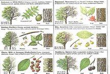 FBL Y1Q1: Trees