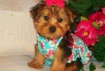 puppy love / by Tamie