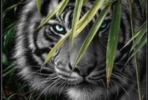 animals / by Tamie