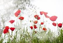 Flowers / Fiori, piante, decorazione...