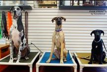 Kennelwood Training / by Kennelwood Pet Resorts
