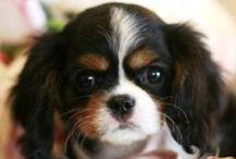 Animal love / It's always been puppies over babies for me