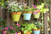 Green growing things / The little garden