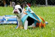 Back to School!  / by Kennelwood Pet Resorts