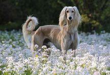 animaux / Pets / les meilleurs amis des hommes, qui nous donnent tant de moments de joie !
