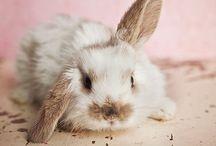 Love.. Bunny Wunnies / by Kelly Rachel