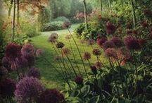 Landscape arch - Plants