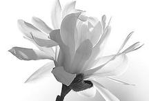 Bring me Flowers / by Iraida Oliva