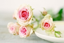 DECORS & FLOWERS / My secret Garden