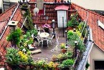 Balkon, Urban Gardening / Alles zum Thema Pflanzen auf dem Balkon. Der Balkon als zweites Wohnzimmer im Sommer und als Gartenersatz für den Gemüse- und Obst-Anbau.