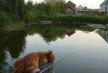 Kittycat Home