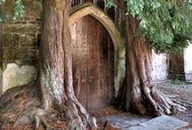 Beautiful Doors / Doors represent choices, mystery and hidden things. Will you open it or continue on your way?