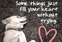 Pet Quotes / Do you like quotes? Do you like pets? So do we! We peruse Pinterest to find the cutest, most inspiring and provocative pet quotes!