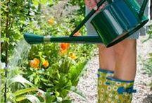 garden Ideas / by Elizabeth Gomez-Boffil