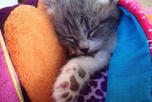 Kitten Happy Hour / We heart kittens. Yup.