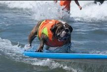 Surf Dogs / Surfing dogs? Check out pins and pics from Helen Woodward Animal Center's most talked-about event: the Surf Dog Surf-A-Thon and our Surf Dog Lessons. All surfing dogs all the time!
