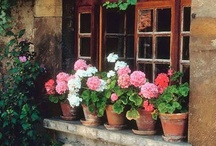 Porch Love! / by Nancy McGee