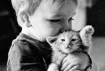 m e o w  / cats! / by Monique Lee