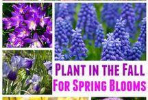 Outdoor/garden ideas / Inspiration to make your outdoor space pretty!