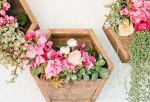 Succulents / Ideas for using succulents