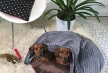 Dog Beds / Ideas for making dog beds, and actual photos of dog beds made by Pattiewack