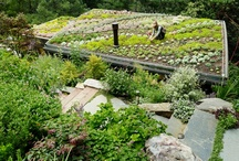 Green Roofs / by Feldman Architecture