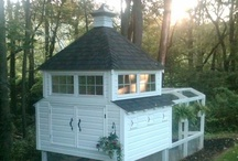 Chicken Coop ~ / by Marcy @ ANTIQUECHASE