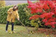 Imádjuk az őszt / We Love Autumn / Őszi tippek: kertészkedés, receptek, divat, utazás, egészségmegőrzés Autumn Tips: gardening, recipes, fashion, travel, health