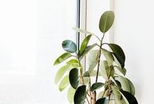 Home | Plants... I can't hurt / Homes are so lovely with some gorgeous living plants, not so appealing when they are dead so pick the right ones!