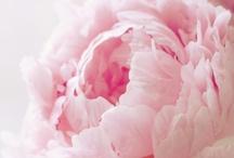 Gardens & Flowers / by Naseeba Khader