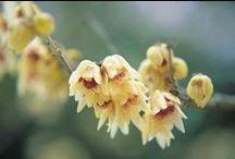 Flowers / by Giovanni Marchitelli