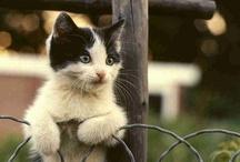 F E L I N E S / I love cats. / by GIRLS PEARLS & POWDER