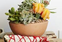 P L A N T S / Plants, succulents, display / by GIRLS PEARLS & POWDER