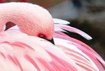 Pretty & Pink... / by Melinda Ingle