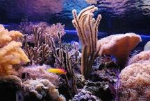 inhabitants for my aquarium / by nervous jessica