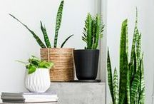 At Home: Plants